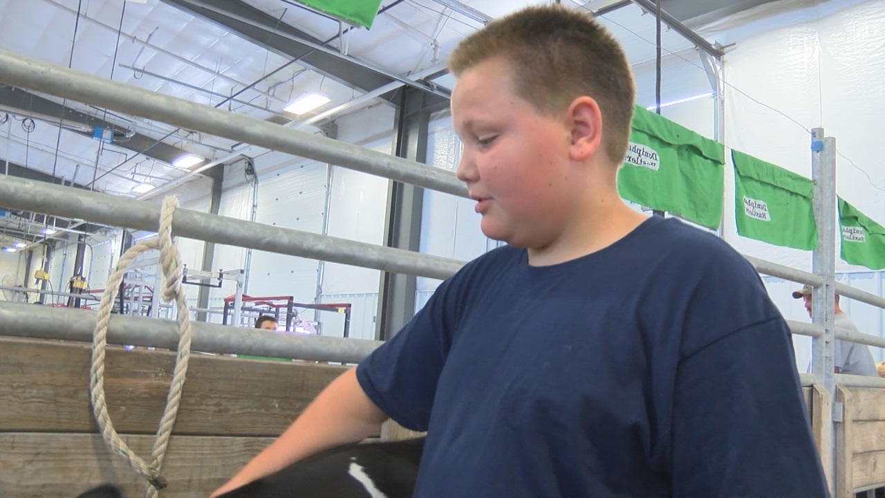Rhett Kosmicki shows his calf at the Hall County Fair (NTV News)