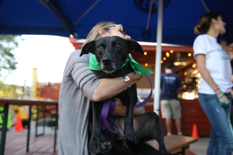 Cafe from Lucky Dog was there in the hopes of being adopted. (Amanda Andrade-Rhoades/DC Refined)