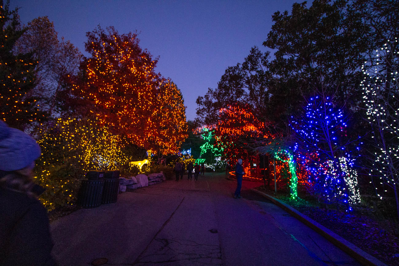 If each of the strands holding the three million LED lights used to illuminate the zoo were laid out one after the next, they'd stretch all the way from here to Chattanooga. It's no wonder the display has been voted as USA Today's Best Zoo Lights in the Country for the past two years. Aside from enjoying the spectacular illuminations, guests can enjoy classic festivities like a ride on the Toyland Express Train, Madcap black light puppet performances, and visits to certain animal enclosures. / Image: Katie Robinson, Cincinnati Refined // Published: 11.16.19