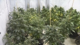 State House considers bill that would allow home grown marijuana
