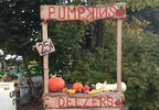 Guests coming to Delzer's Pumpkin Farm can choose their own pumpkins in Oconto Falls, October 9, 2017, (WLUK/Lauren Kalil)