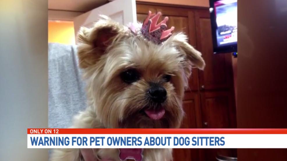 Officials Yorkie S Death Raises Concerns About Dog