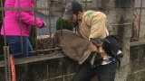 ODFW comes to the rescue of two animals stuck in fences