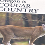 Cougar seen in residential Springfield area