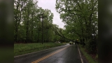 Downed trees leave thousands of Lynchburg area residents in the dark