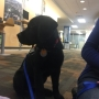 UT students to help host puppy training program