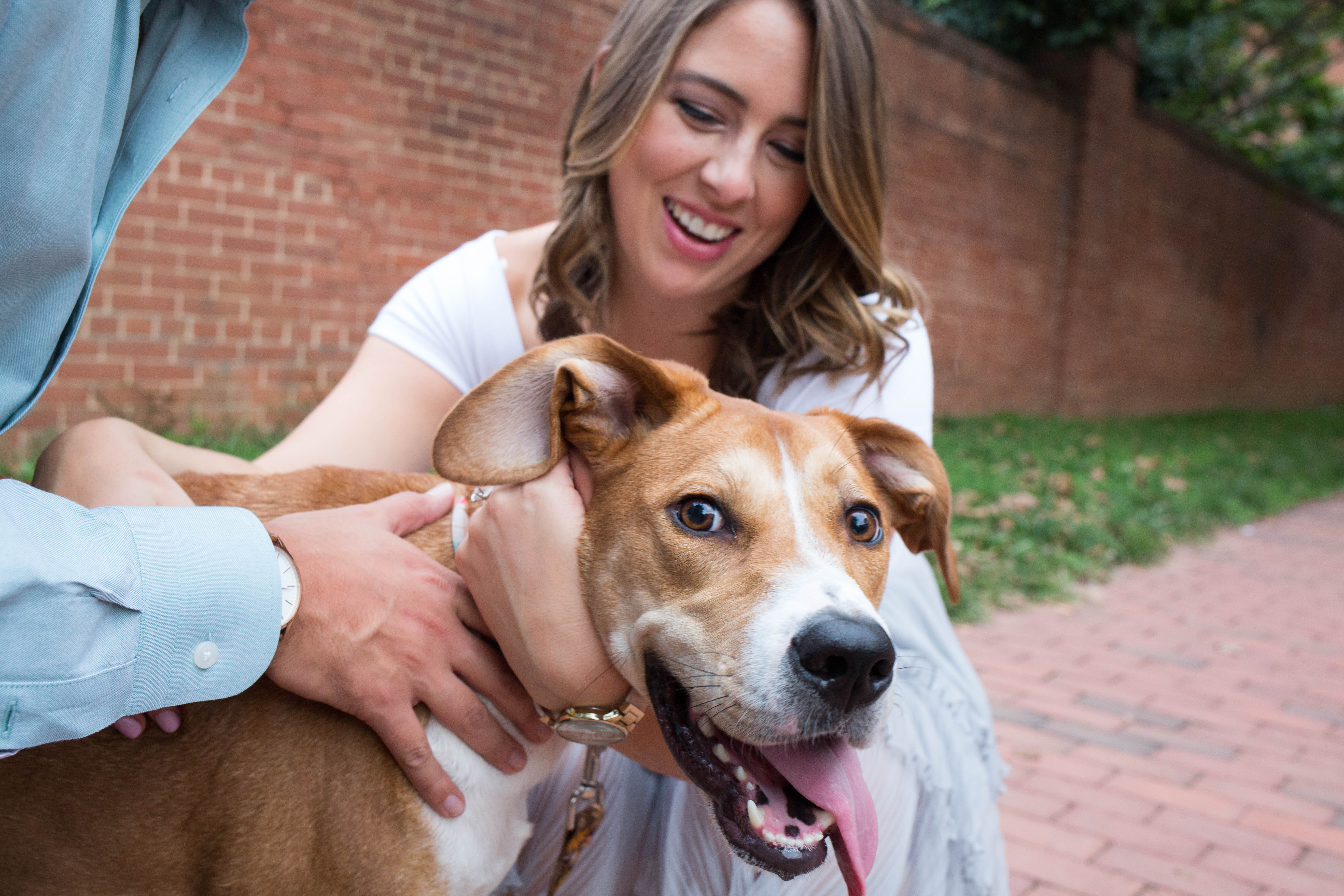 "Meet Penny, a two-year-old Beagle/Hound mix who recently had the honor of participating in mom and dad's engagement photoshoot! Though Penny won't be in attendance at the wedding (don't worry, she's being treated to an all-expenses paid vacation at Dogtopia that week), her parents still wanted her prominently featured in their engagement photos as ""she is family."" In fact, Penny was a gift from her dad to her mom on New Years Day in 2016; she was adopted from Homeward Trails in Fairfax Station. Penny loves peanut butter, going to the dog park  and watching The Bachelor with her mom and dad, but she is not a big fan of the Roomba. Her special skills include eating whatever she pleases and maintaining an awesome figure -- we're jealous Penny! If you or someone you know has a pet you'd like featured, email us at dcrefined@gmail.com or tag #DCRUFFined and your furbaby could be the next spotlighted! (Image: Amanda Andrade-Rhoades/ DC Refined)"
