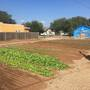 Amarillo group works to change San Jacinto neighborhood through urban farming