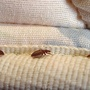 3 hurt after Ohio fire caused by attempt to kill bed bugs