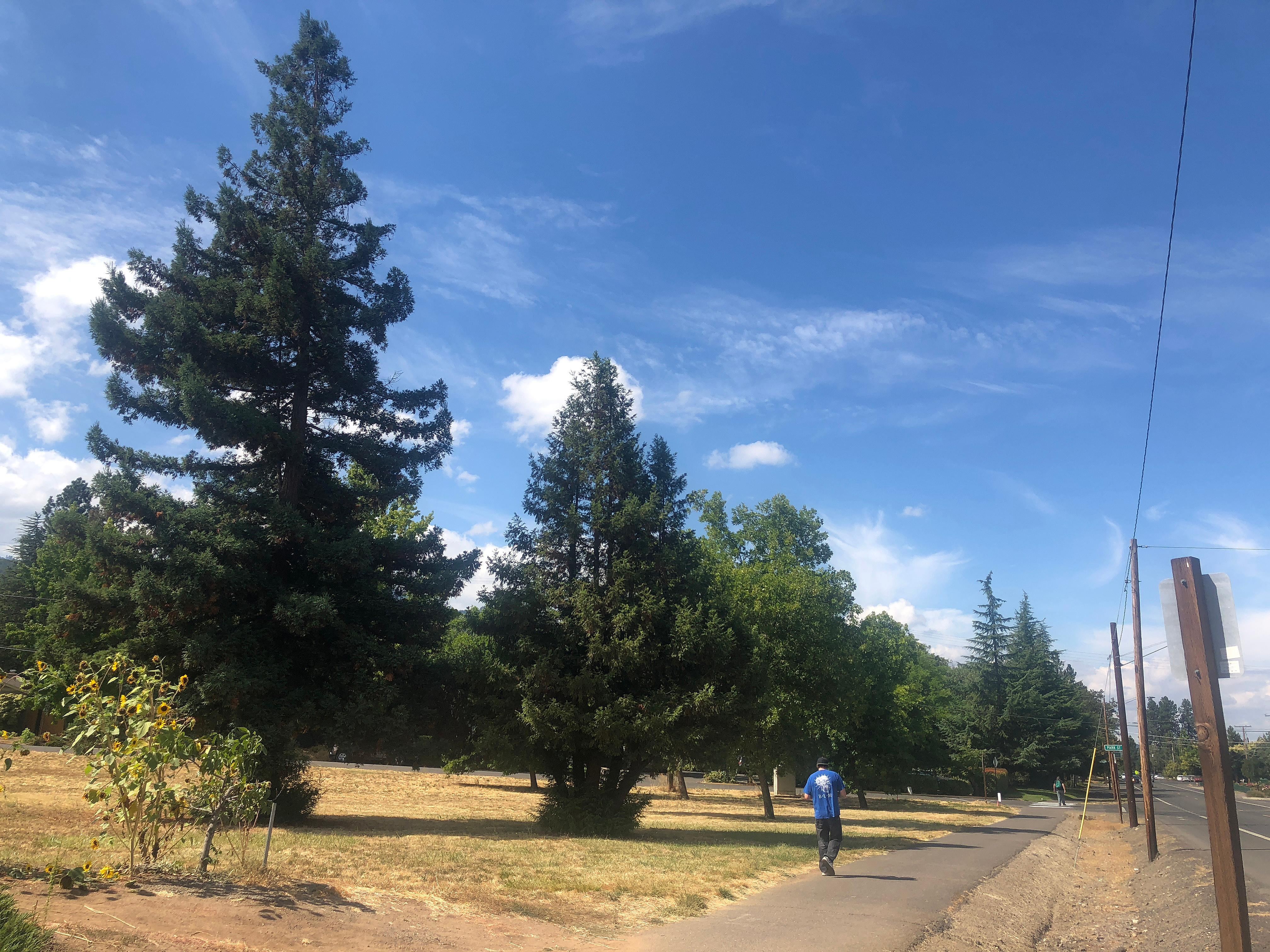 Daily Tidings / Bert Etling<br>A pair of redwood trees, at left, would be removed from a three-quarter acre lot along Siskiyou Boulevard (at right) to make way for a 15-unit apartment complex with 60 bedrooms.