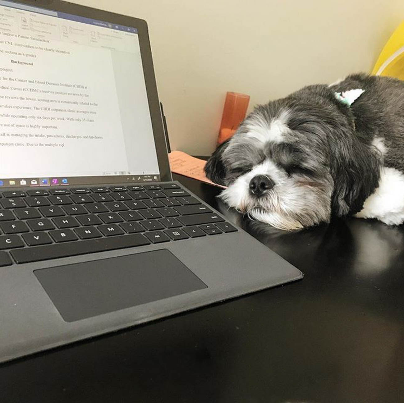 Proofreading the boss' documents / Image courtesy of Instagram user @louisdoggie // Published: 4.1.20