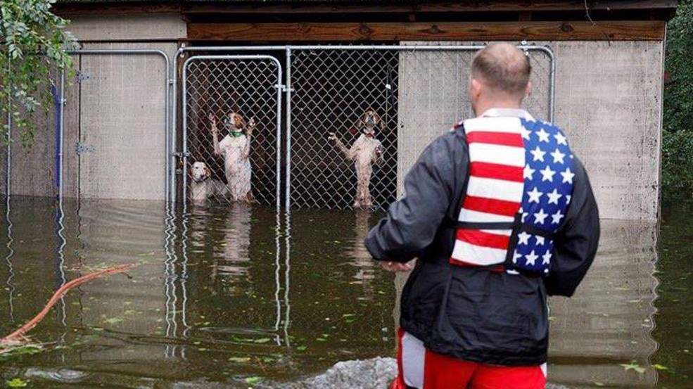 Reporter Helps Rescue 6 Dogs Trapped In Flooded Cage In North Carolina