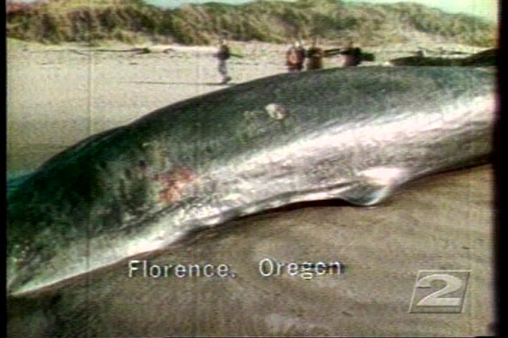 "<p>""It had to be said the Oregon State Highway Department not only had a whale of a problem on its hands,"" Paul Linnman reported for KATU that year. ""It had a stinking whale of a problem.""</p>Thumbnail"