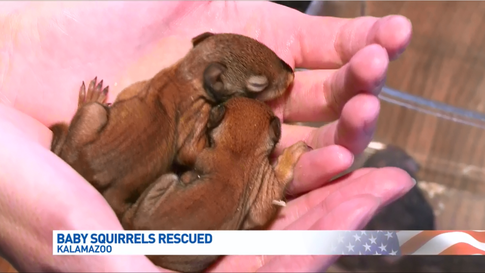 Baby Red Squirrels Discovered In New Car Intake Wwmt
