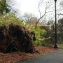 Storm cleanup continues in Albany and Dougherty County