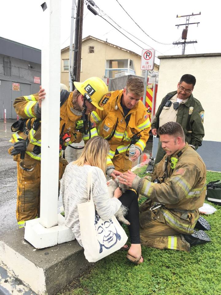 Dog pulled from fire revived after 20 minutes of mouth-to-snout resuscitation (Photo: Santa Monica Fire Department, Courtesy Billy Fernando)