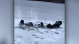 Caught on video: Teens fall through ice in Central Park