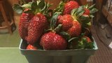 Conway produce market welcomes customers for strawberry season
