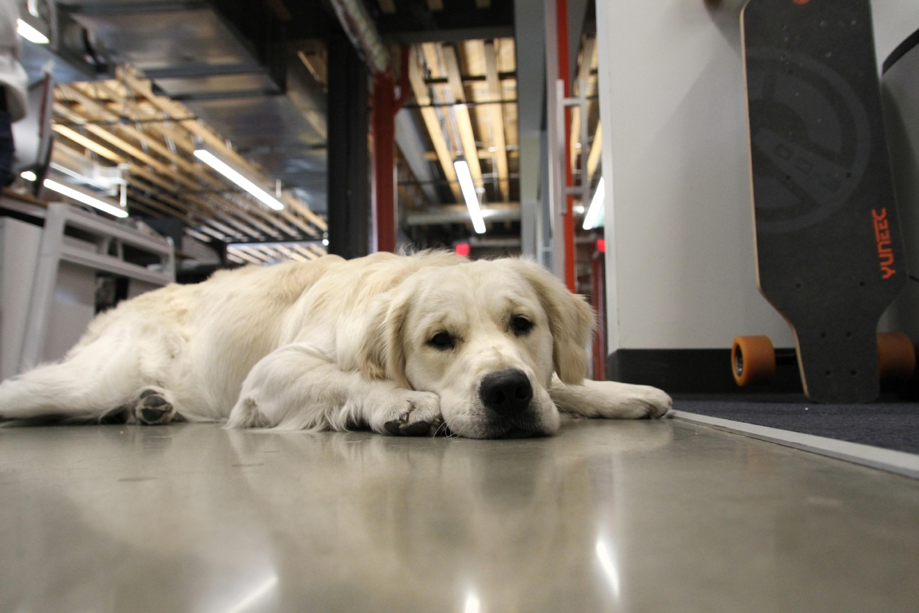 Watson relaxes in the hallway after a long day of being cute. (Amanda Andrade-Rhoades/DC Refined)